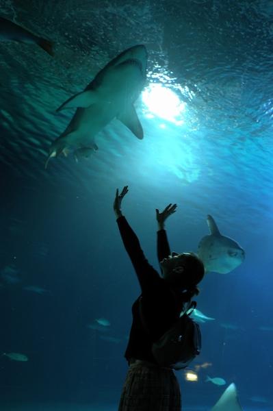 El acuarium de Valencia, nadando en seco. Ideal para aprender. Foto de Cornelius van Jol.