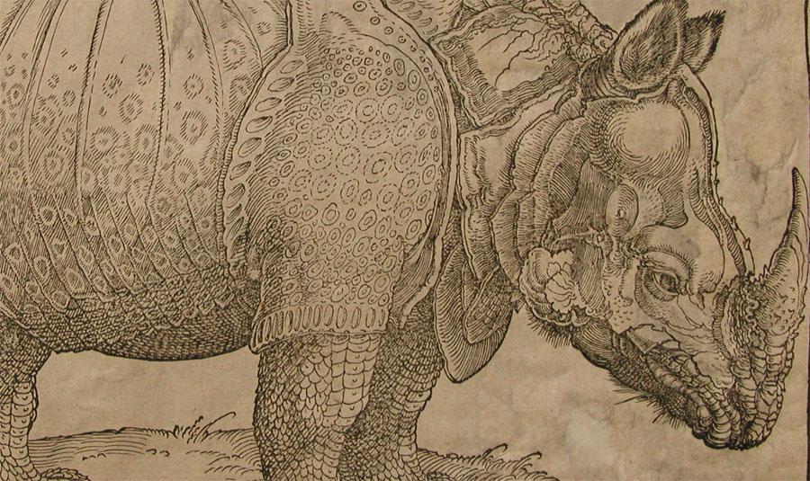 Tras las huellas del rinoceronte de Durero