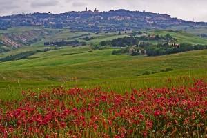 Volterra, rodeada de las apacibles y melancólicas colina toscanas. Foto de Vanto5.