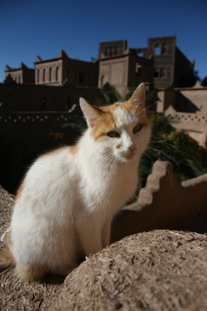 """Kasbah de Skoura con guía""""gato"""" turístico incluido. Foto de El Giróscopo Viajero ©"""