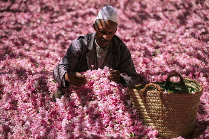 Producción de rosas
