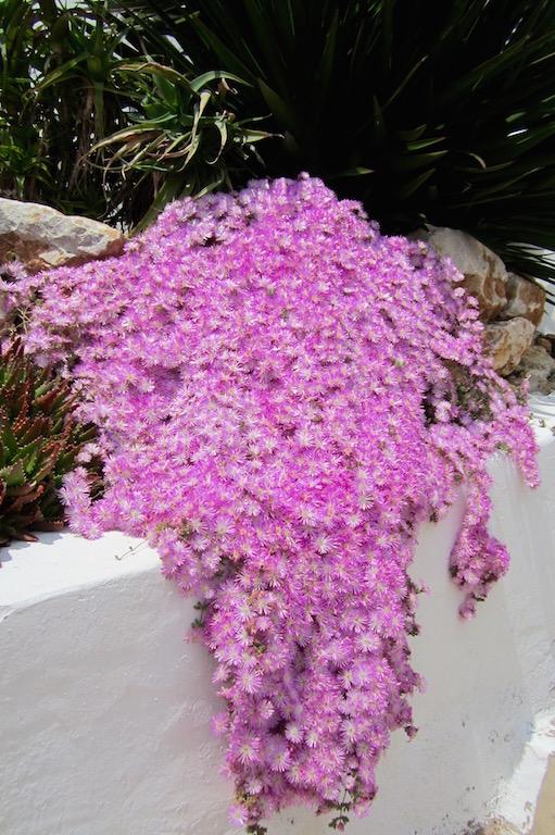 A finales de abril la primavera es una explosión de color en el Algarve. © María Calvo.
