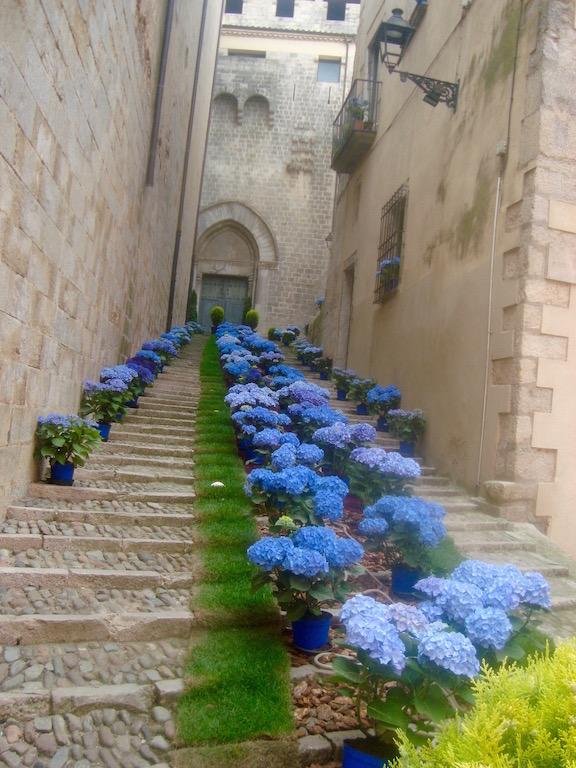 Las hermosas hortensias azules decorando unas escaleras en el casco antiguo de Girona. © Elbelina Carranza.