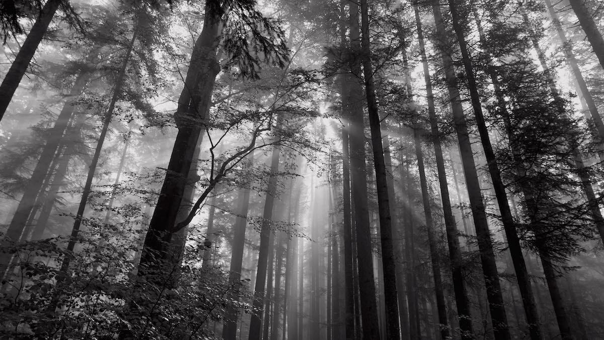 Bosque durante la ascensión al monte Ceahlau. Una niebla matinal provocó cientos de fotos maravillosas. ©Iñigo Pedrueza.