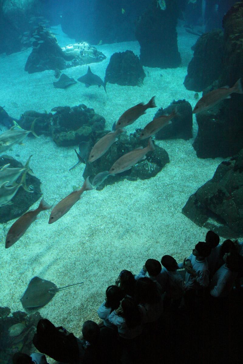 Espectadores atónitos ante los bancos de peces