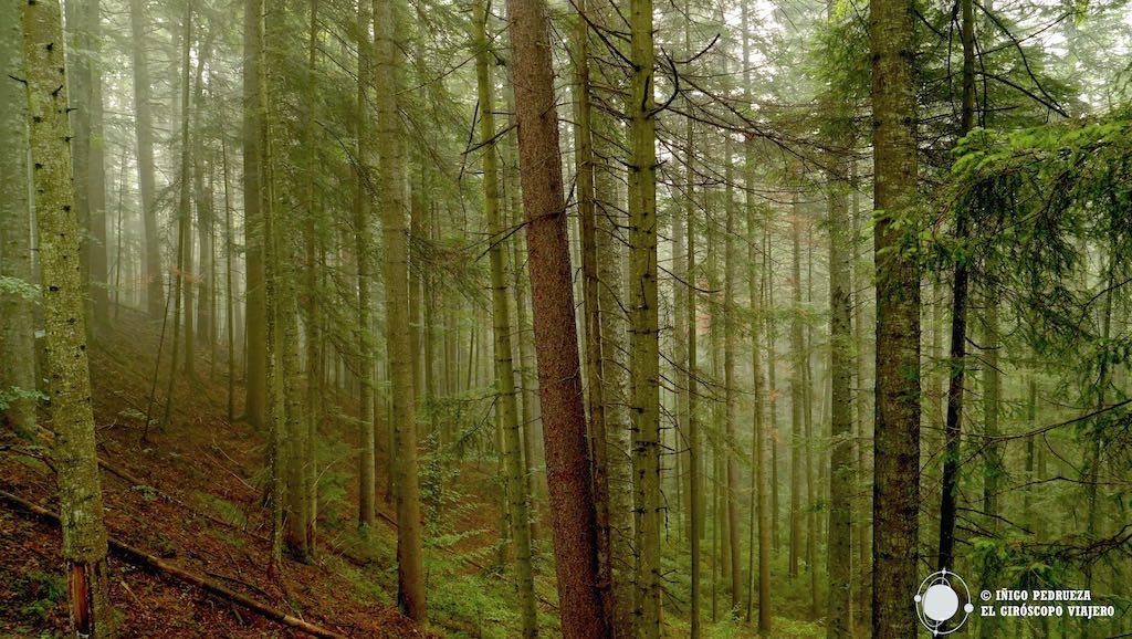 Verde y marrón rojizo dominan el bosque por las mañanas. ©Iñigo Pedrueza