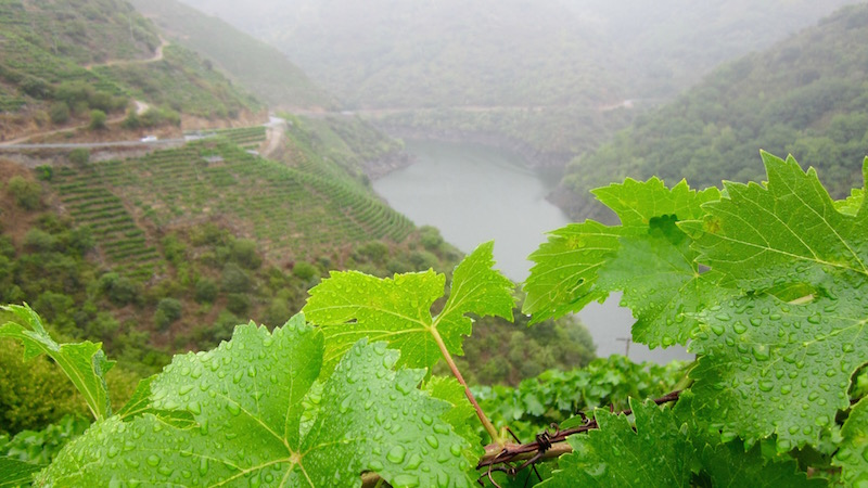 Recorrer el Cañón del Sil con lluvia también tiene su encanto. ©María Calvo.