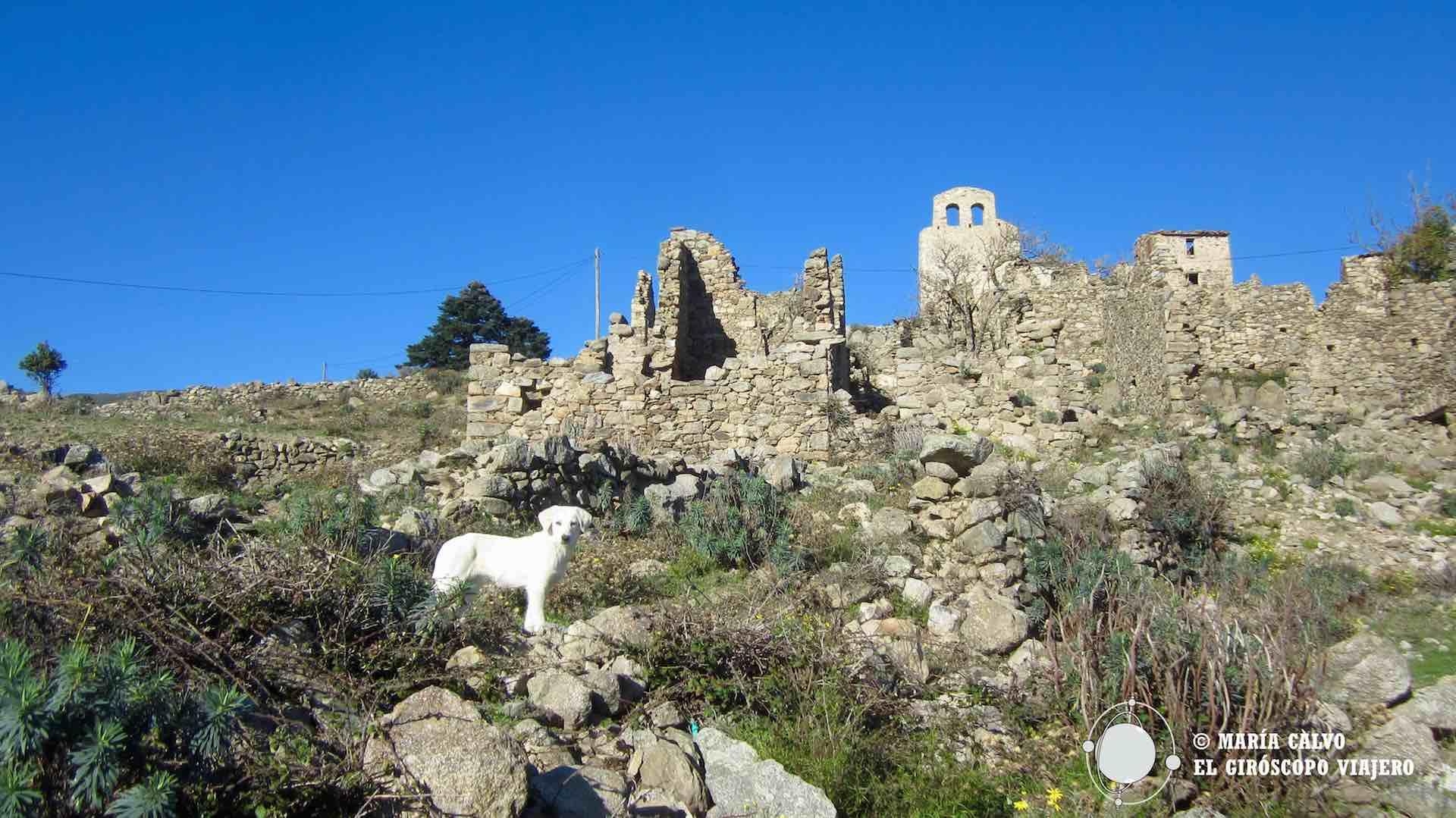 El perro de los Pirineos habitante del pueblo de Comes