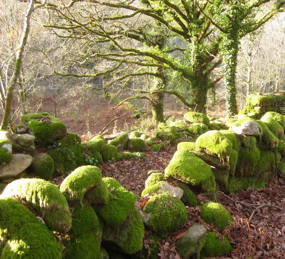 La Galicia verde