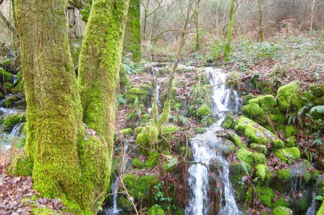 Las aguas bajan cristalinas por el sendero del Camino Real