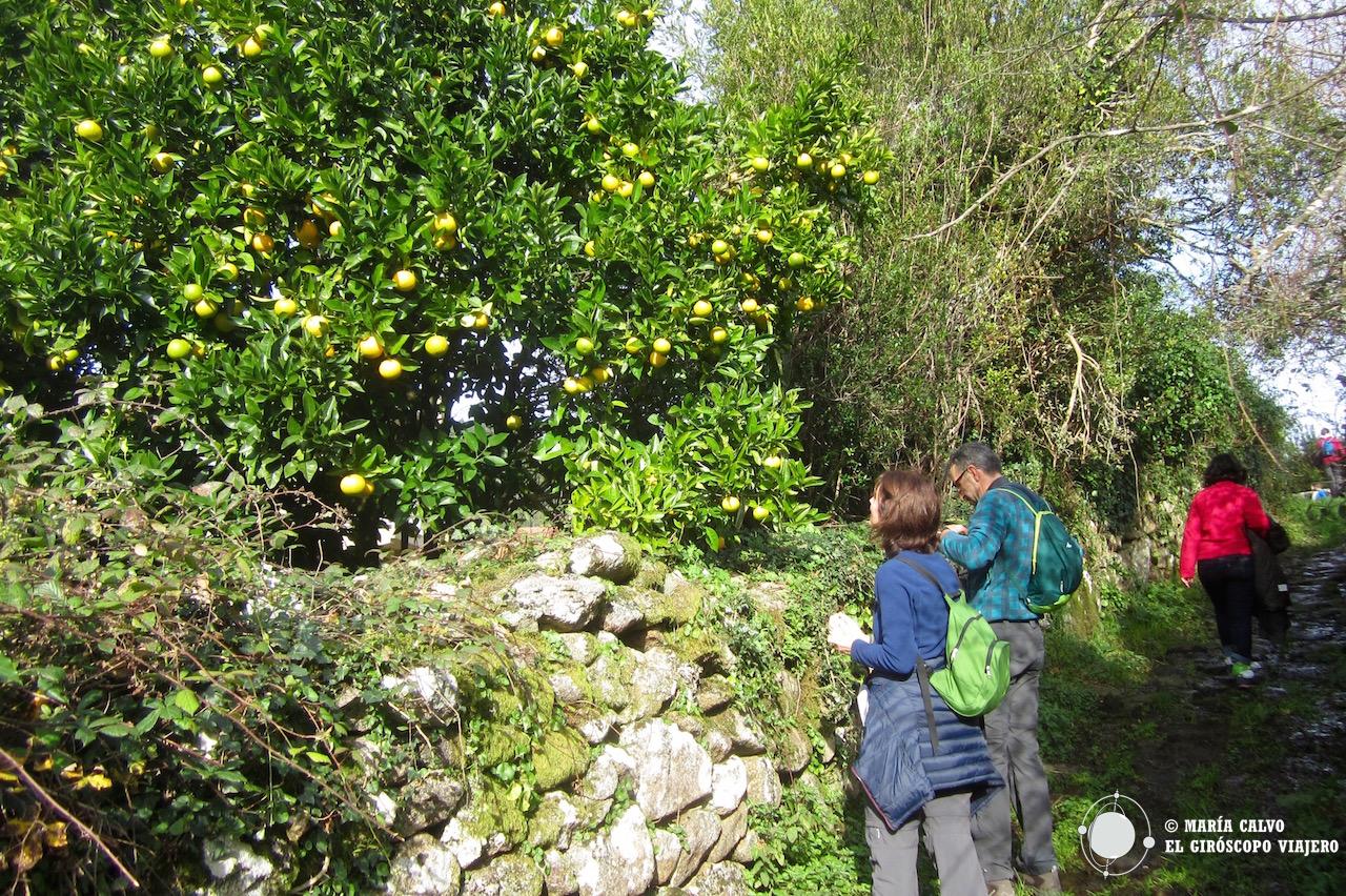 La tentación de las naranjas en el camino