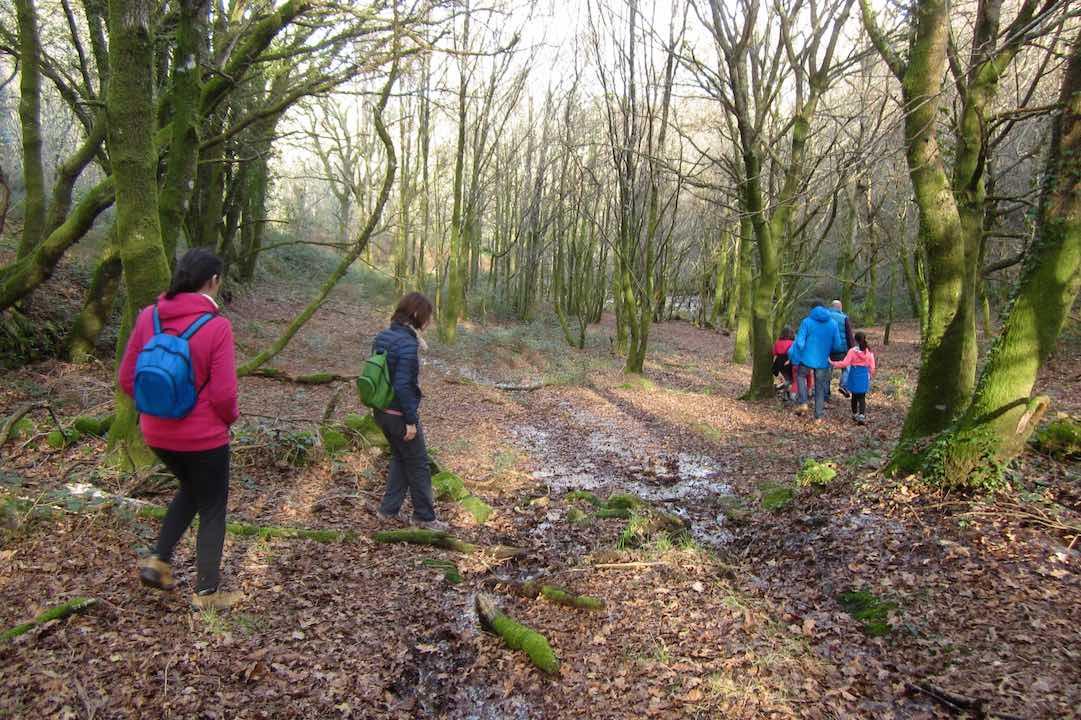 Una fila de colores por los bosques gallegos