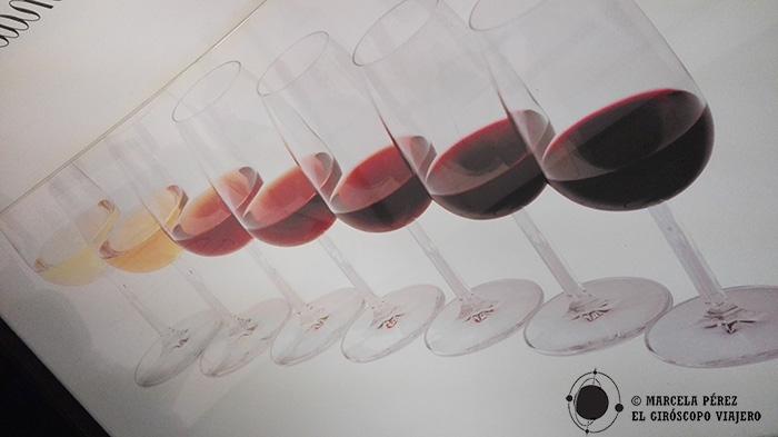 Diferentes tipos de Vinos de Porto