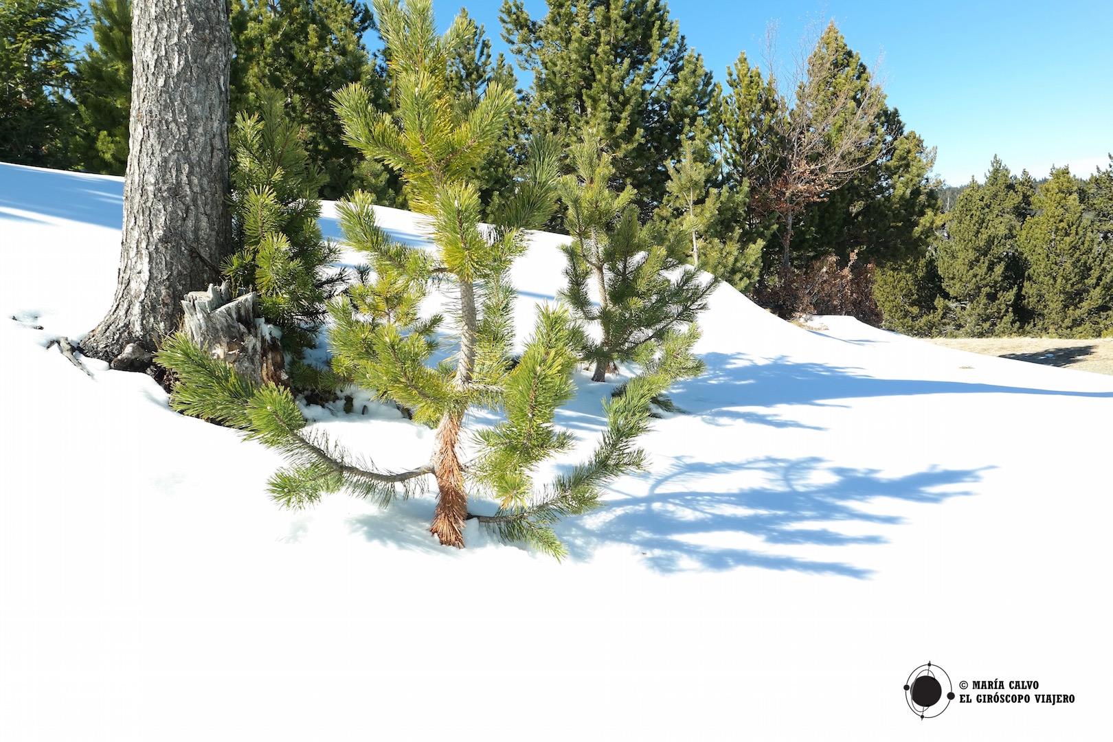 Enterradito en la nieve