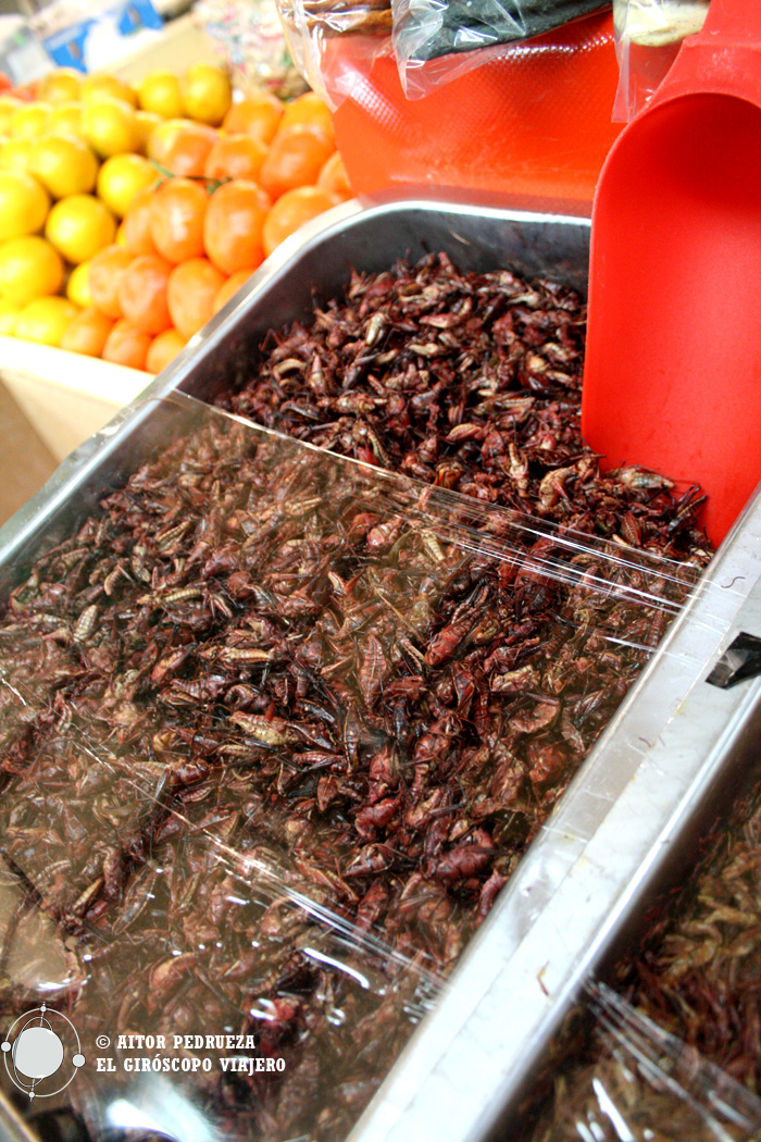 Los Chapulines (saltamontes), un clásico gastronómico de México