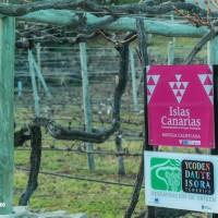 Bodegas de Tenerife, descubriendo el vino canario