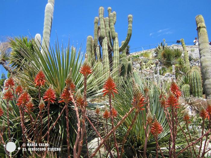 Cactus verticales y plantas suculentas en el Jardín botánico de Eze