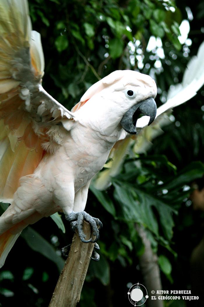 El papagayo blanco de la Biosfera de Génova