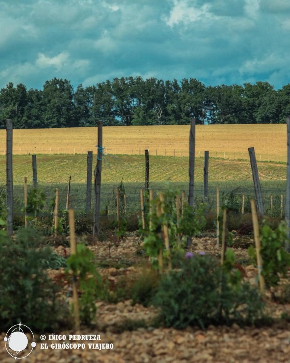 Viñas y cultivos de la D.O Saint Sardos en el Domaine de la Tucayne, una producción Bio excelente.