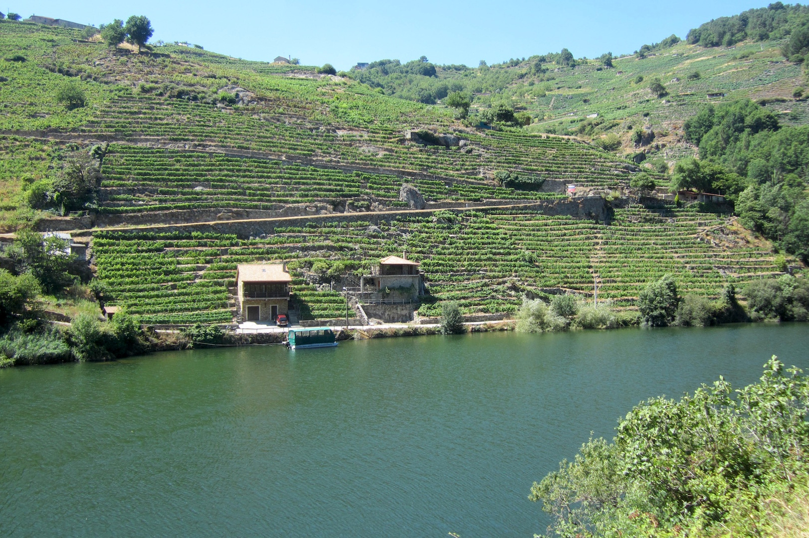 Los viñedos bordan las orillas del río Miño