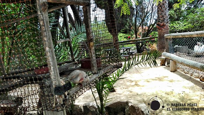Pajarillos gozando de su libertad en el oasis de Porto Santo