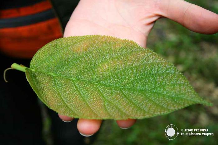 Plantas medicinales en la Selva de Palenque