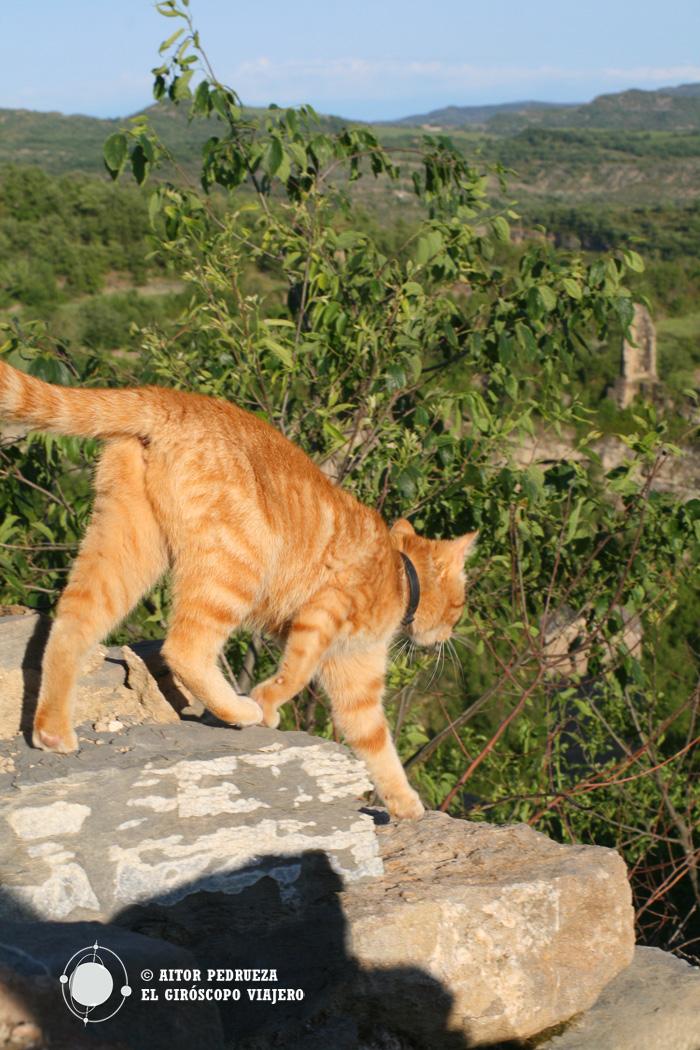 """El gato """"guía"""" de Montañana"""