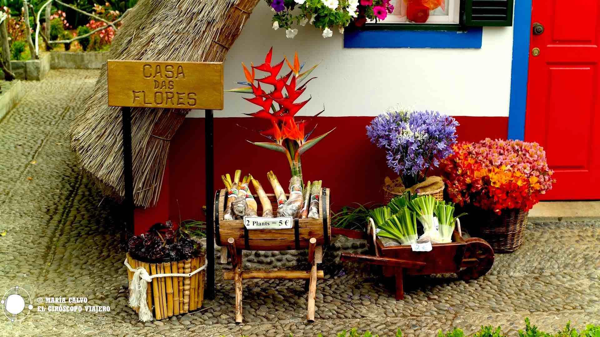 Flores para llevar de recuerdo de nuestro viaje a Madeira