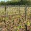 Bodegas de Fronton en Tarn-et-Garonne, el mundo del vino como paradoja