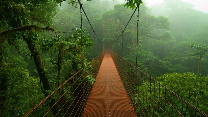 Selva frondosa de Costa Rica