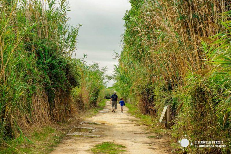 Caminos de la zona natural del Río Llobregat