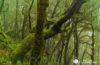 En el laberinto milenario del Parque Nacional de Garajonay, La Gomera