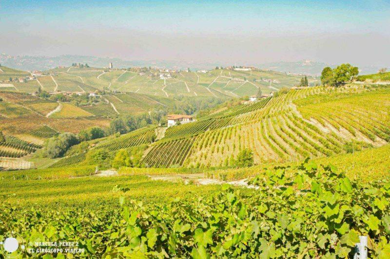 La romántica postal de los viñedos del Piamonte en el otoño ©Marcela Pérez Z.