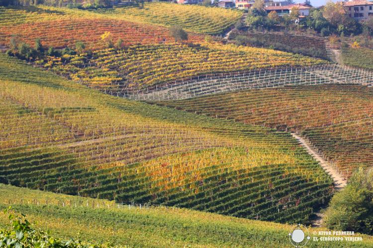 Viñedos en le Langhe-Roero y Monferrato