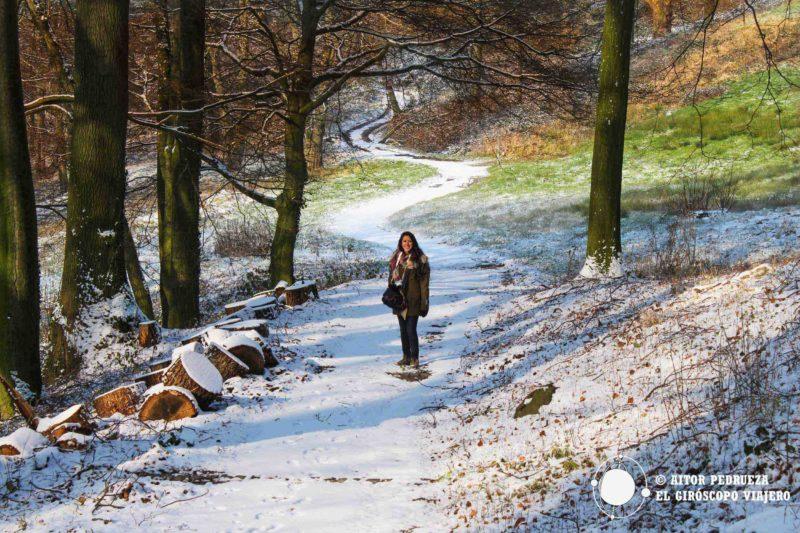 Maravillosos caminos que conducen al castillo entre nieve y árboles que danzan al compás del invierno