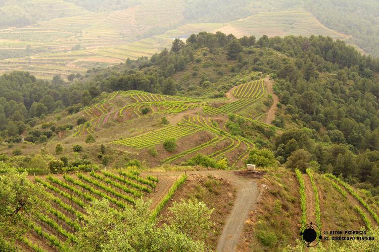 Paisaje de viñedos del Priorat