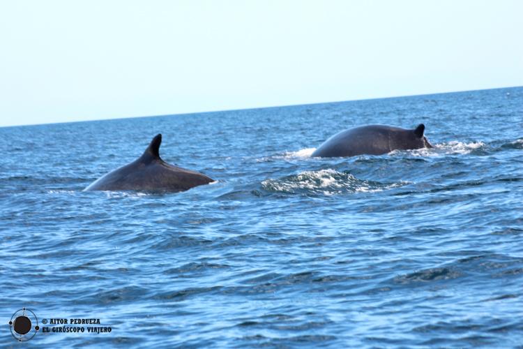 Ballenas en la costa del golfo de Orosei