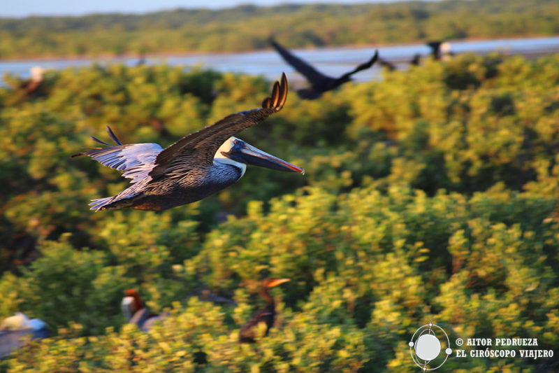 Aves en Isla Pájaros