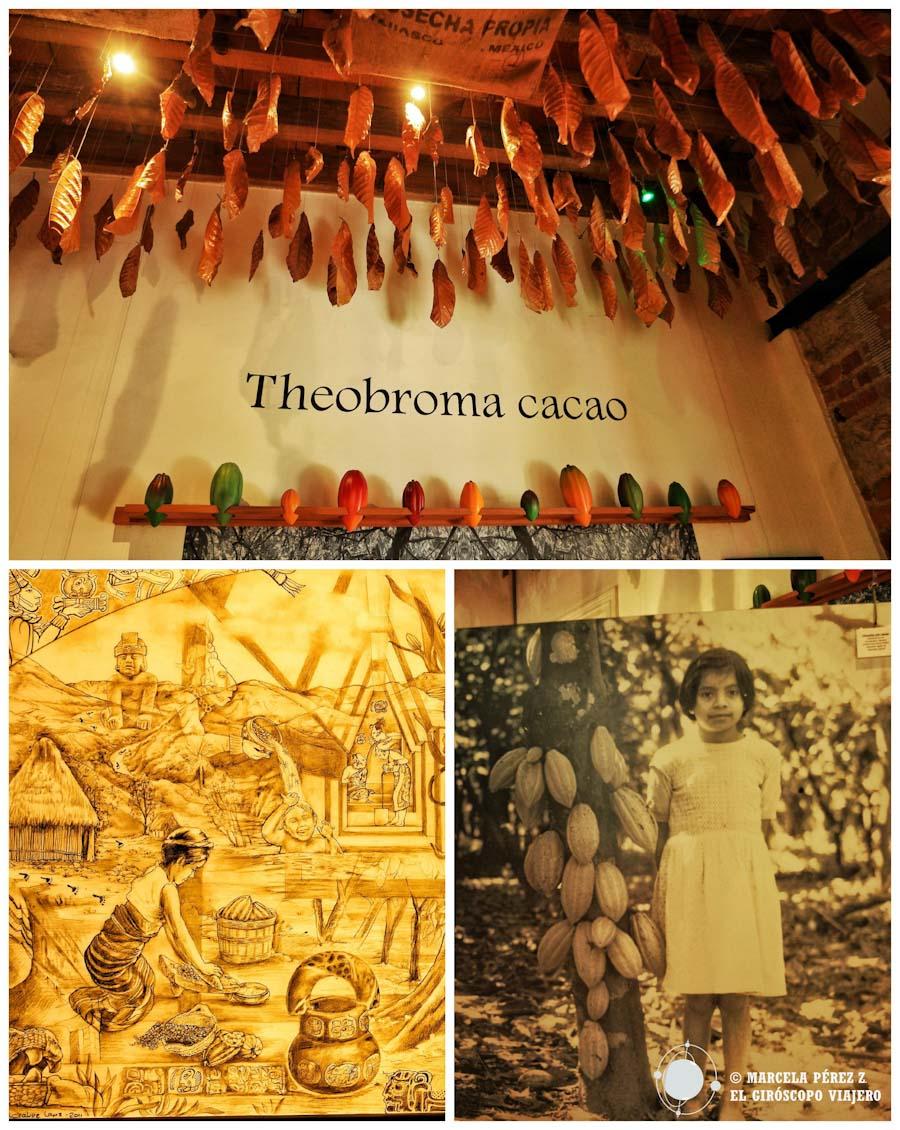 El cacao como regalo para el mundo ©Marcela Pérez Z.