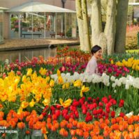 Keukenhoff, el mayor jardín de tulipanes del mundo está al lado de Amsterdam
