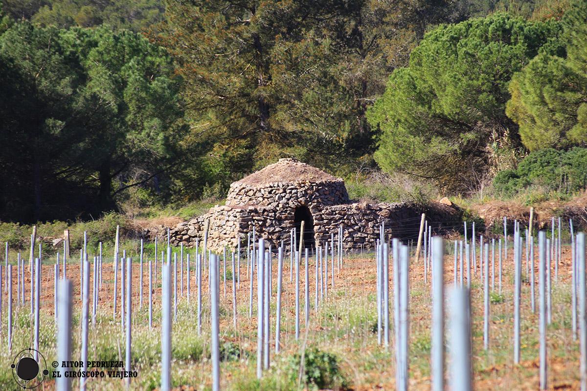 Paisaje de viñedos y cabañas de pastores en Begues