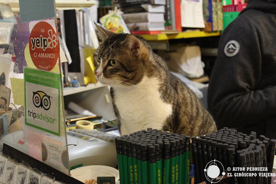 Uno de los gatos de la librería Acqua Alta