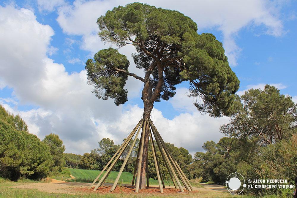 Pi d'en Xandri, naturaleza a un minuto de Sant Cugat