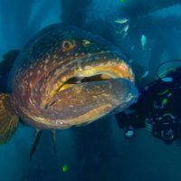 Entrevista a Kike Talledo, una vida dedicada al Mar