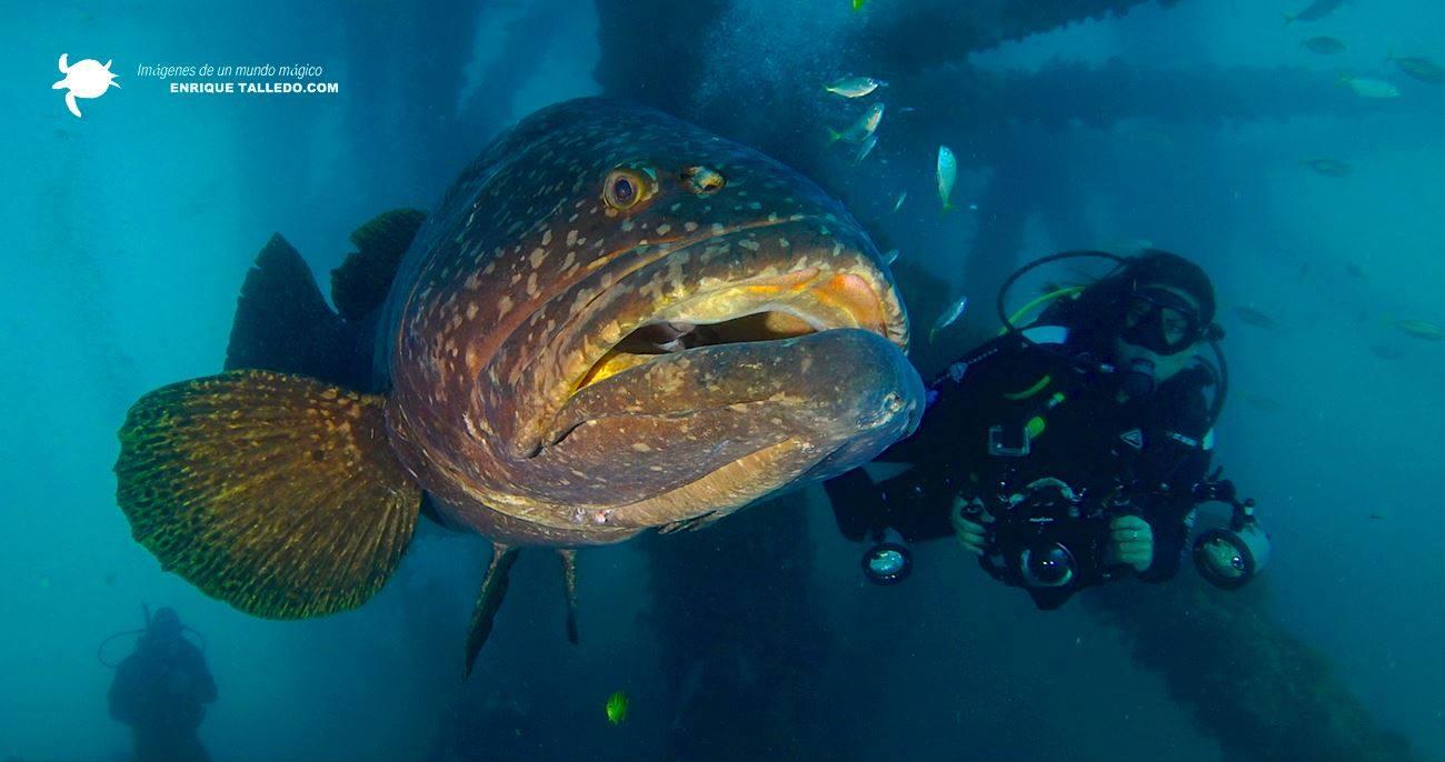 Kike Talledo en una de sus inmersiones para documentar la vida marina