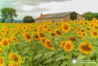 Haute-Vienne, Nueva Aquitania. Road trip por el país de la porcelana de Limoges