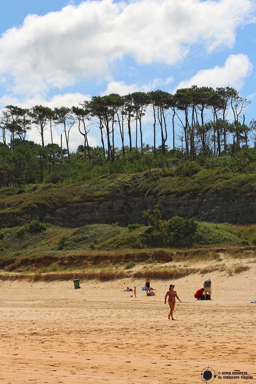 Bosque de pinos sobre las playas de Somo