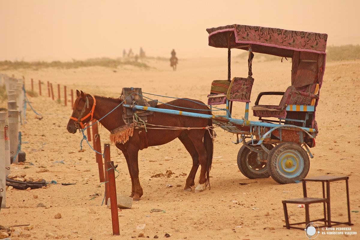 Caballo en Douz, puerta del Desierto del Sáhara