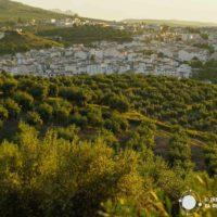 Almedinilla: Roma y Olivos centenarios en la Subbética Cordobesa