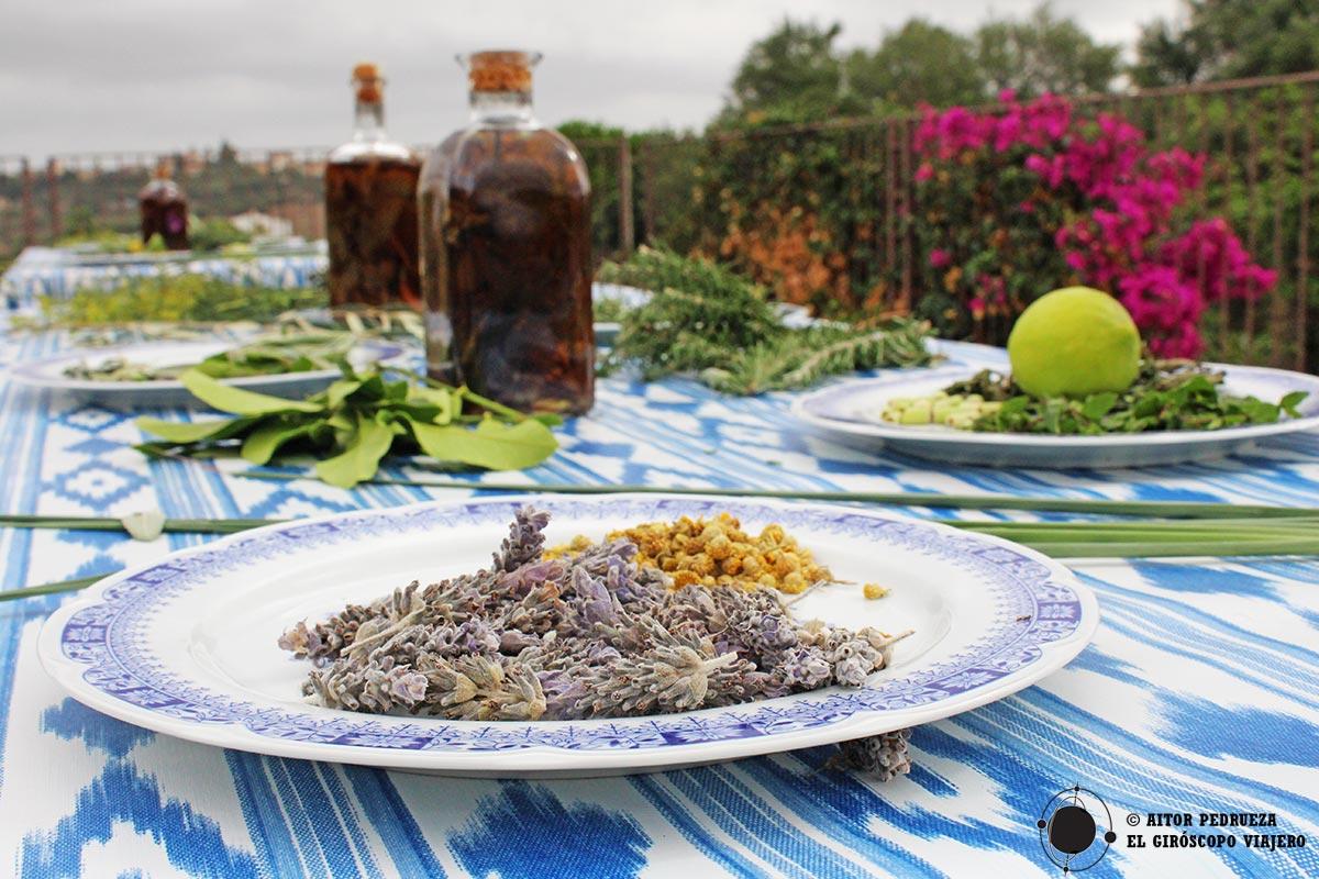 Taller de elaboración de licor de hierbas mallorquín
